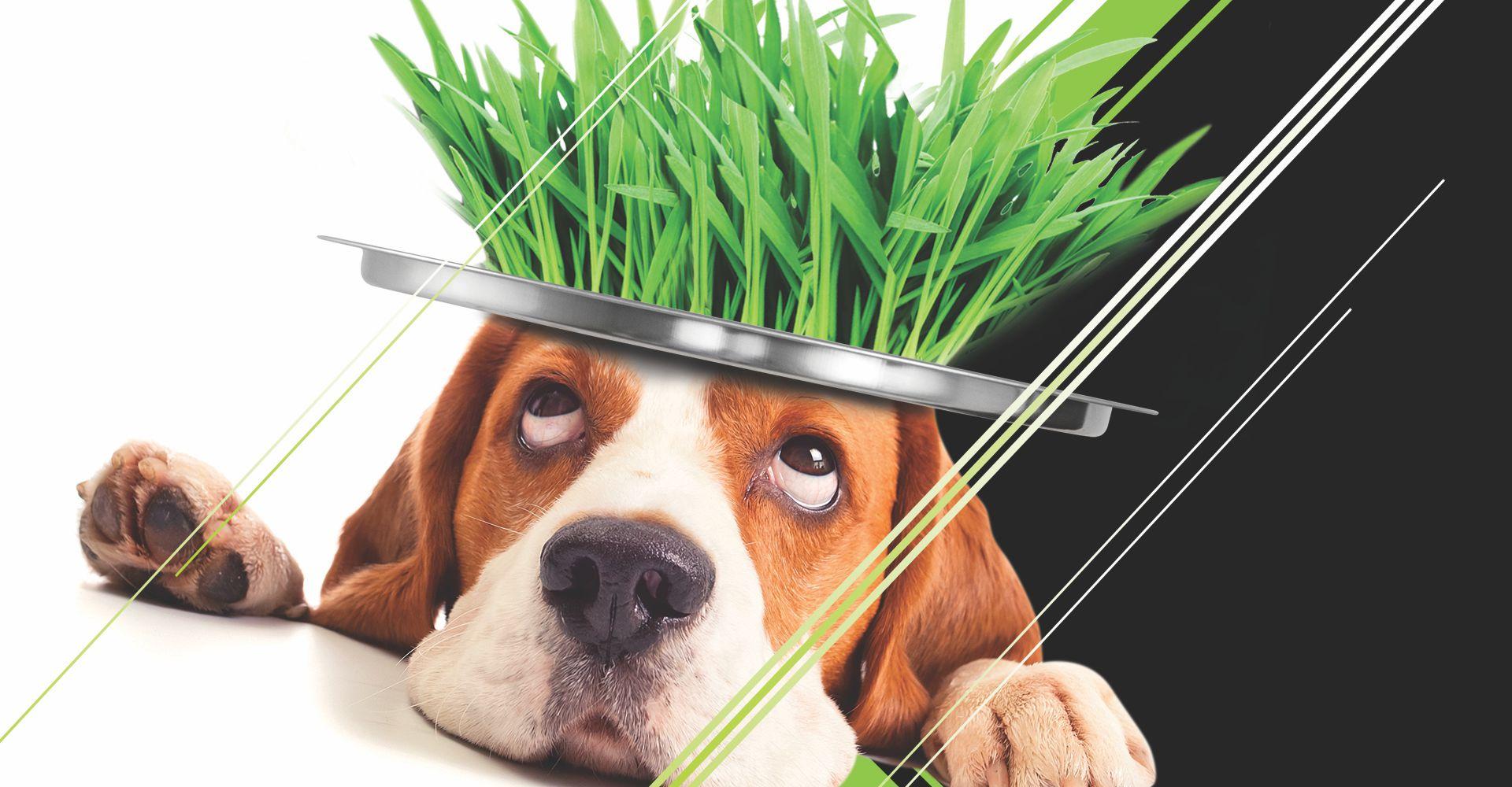 Animali domestici e erba sintetica: è una buona idea?